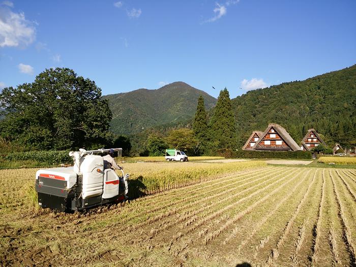 白川郷 稲刈りの後・・・・。 改めて季節の移り変わり&風景というのはアッ!という間だな~ ⑥