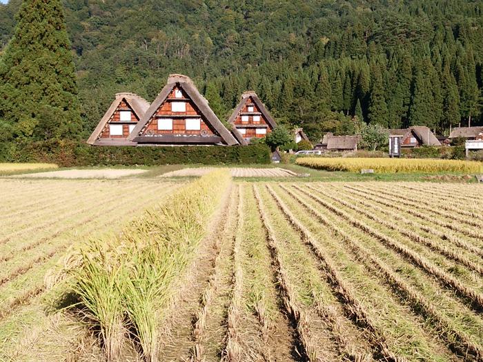 白川郷 稲刈りの後・・・・。 改めて季節の移り変わり&風景というのはアッ!という間だな~ ⑧