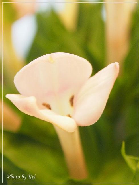 ピンク色のおお花♪