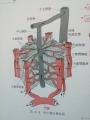 図_肝臓構造ー