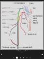 画像_迷走、副神経&核