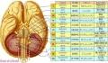 画像_脳神経外分類