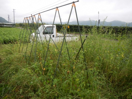 畑の片付け (2)