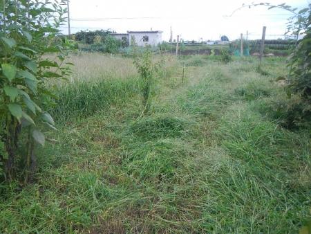 草刈り作業 (3)