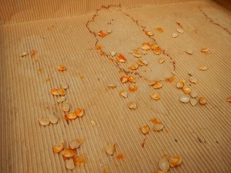 かぼちゃ (3)