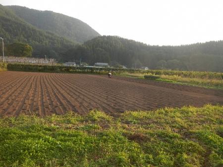 黒麦 (4)
