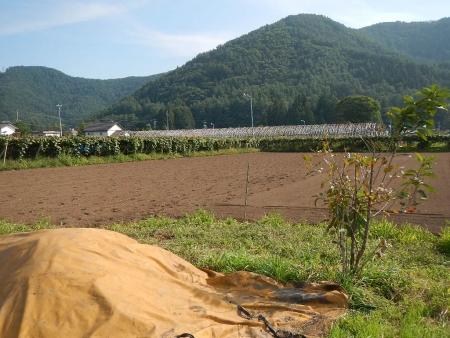 黒麦 (2)