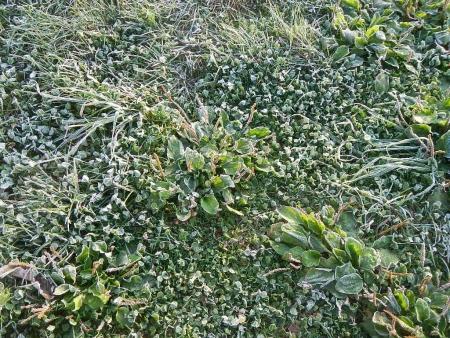 霜が来た (2)