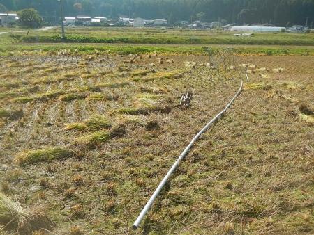稲刈り (3)