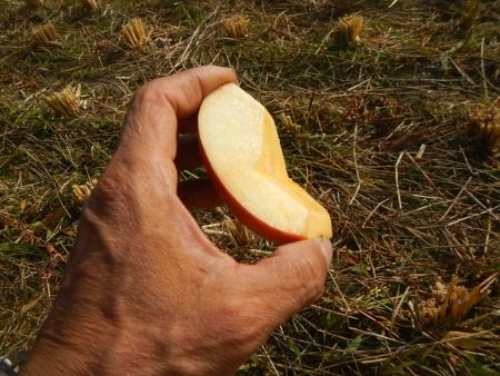 稲の脱穀作業 (6)