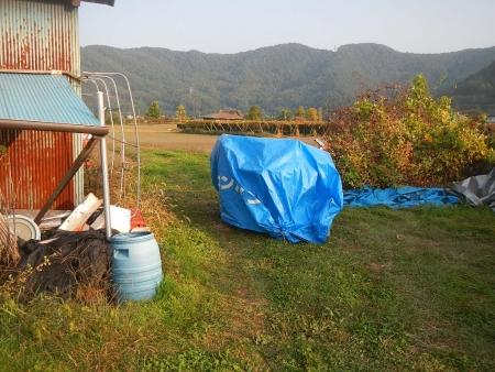 稲の脱穀作業 (11)
