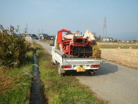 稲の脱穀作業 (9)