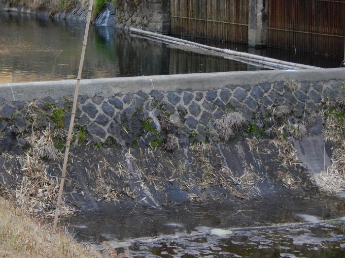 DSCN9807川走川第一取水堰