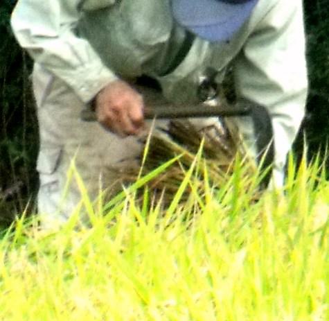 20150826 稲刈りとどんぐり 003-4