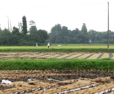 20150826 稲刈りとどんぐり 068-3