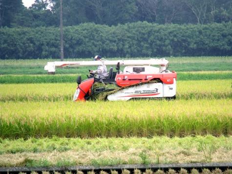 20150826 稲刈りとどんぐり 016-2