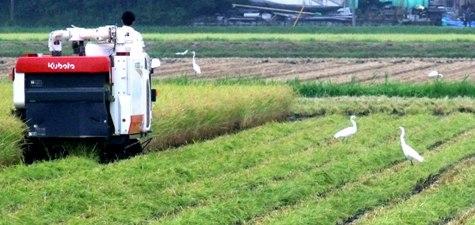 20150826 稲刈りとどんぐり 089-2