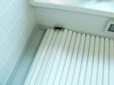 20150926 風呂場のかに 018-3
