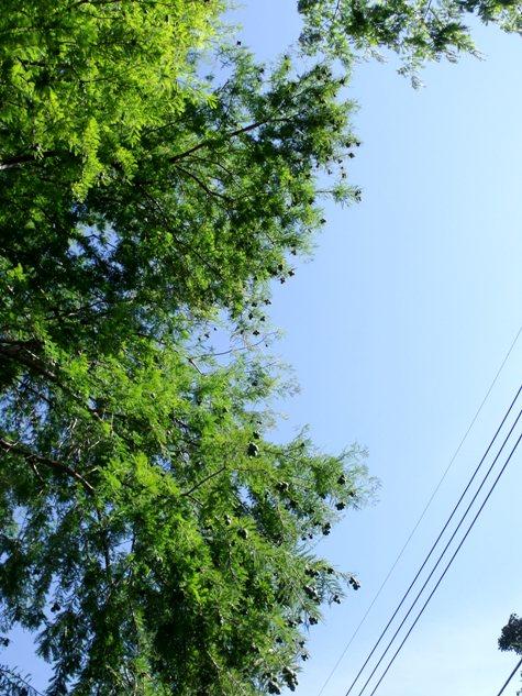20150930 秋の山の風景 018-2