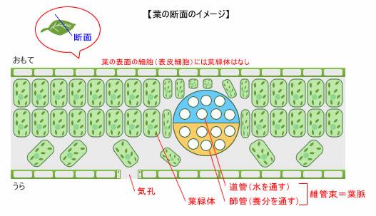 plant8.jpg