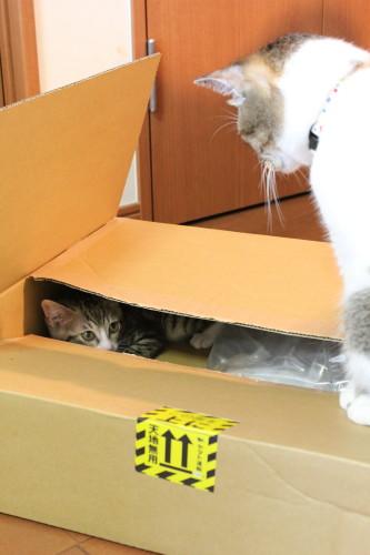 箱ナッツ3