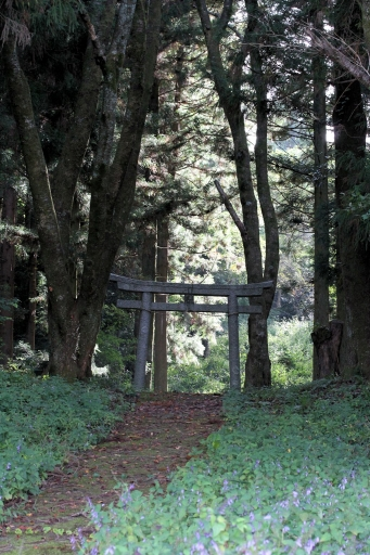 空山神社参道