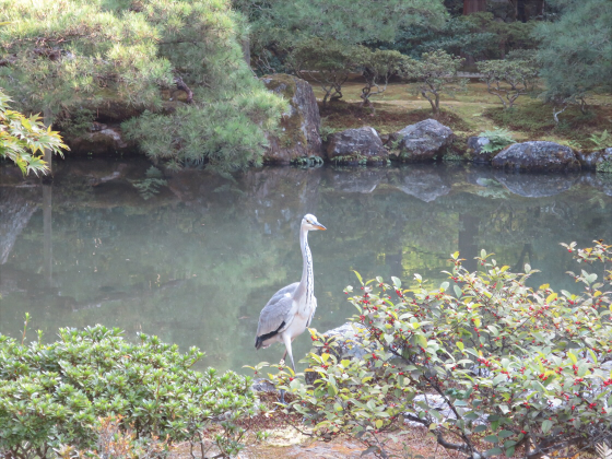 京都銀閣寺に行ってきました10