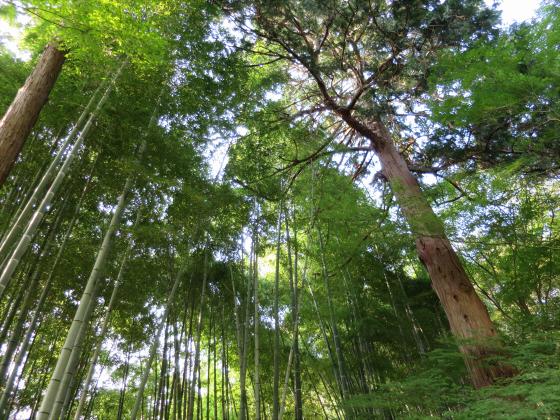 京都銀閣寺に行ってきました29