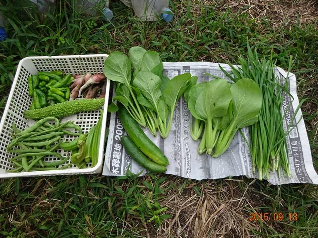 今日の収穫物