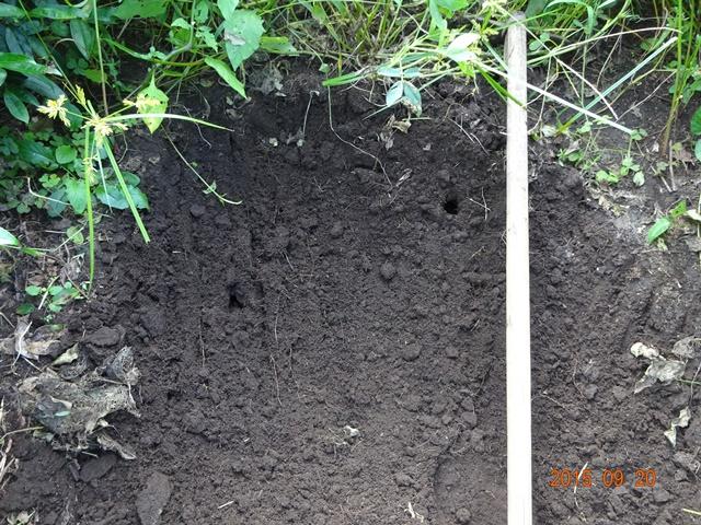 落花生畑にモグラの穴が二つ