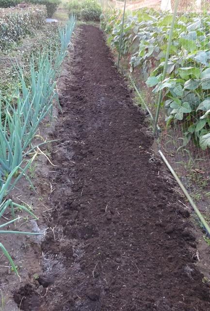 ホウレンソウ畑の準備