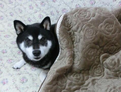 毛布じゃないよ