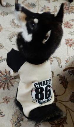 チャロ86
