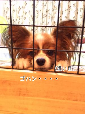 2A3GvFm4きゅんまち3