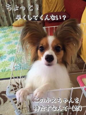jht7NsQCきゅんまち4
