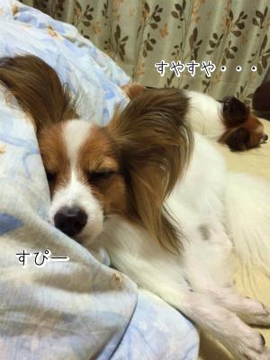 ERpJy2zu睡眠1