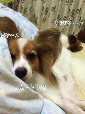KpQaIo7X睡眠2