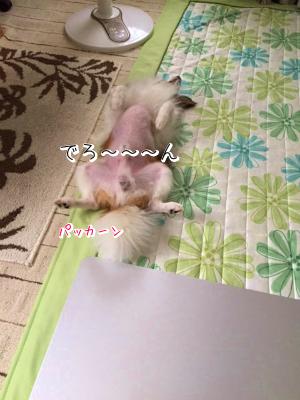 HRbhhmFjkaeru4.png