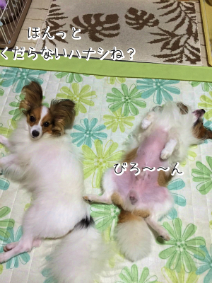 ROiYkN_oyokoku2.png