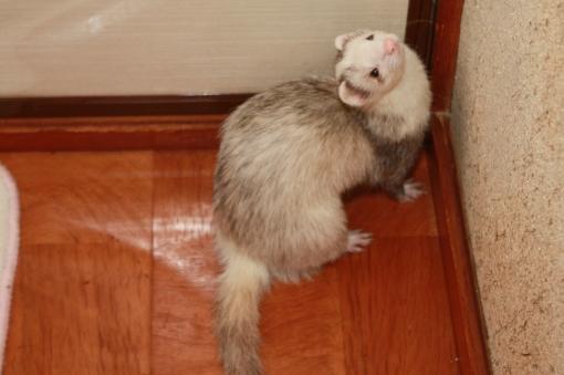 隣の部屋に入ろうとするマルコ