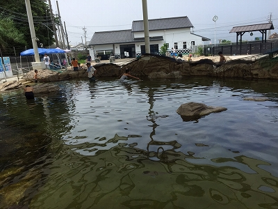 umihoozuki06.jpg