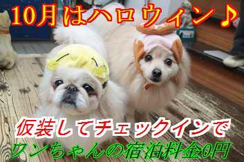 haro12_201510090216444dc.jpg