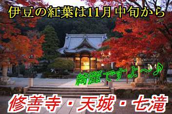 kouyo_201508310217582a1.jpg