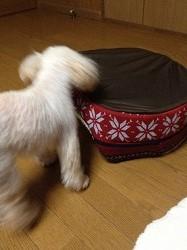 あばれショコラ201510141