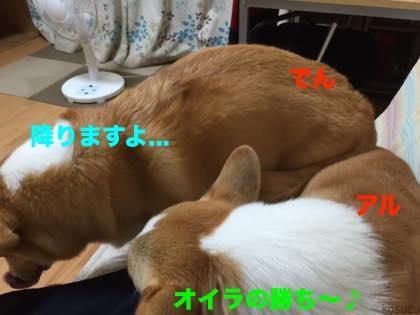 2_201509120944276ae.jpg
