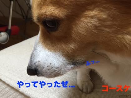 4_2015091710185706d.jpg