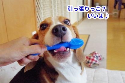 はなまま 7