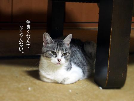 しゃーこ2015.8②