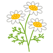 flower_chamomile.png