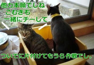 031_convert_20151003155600.jpg